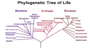 filogeni